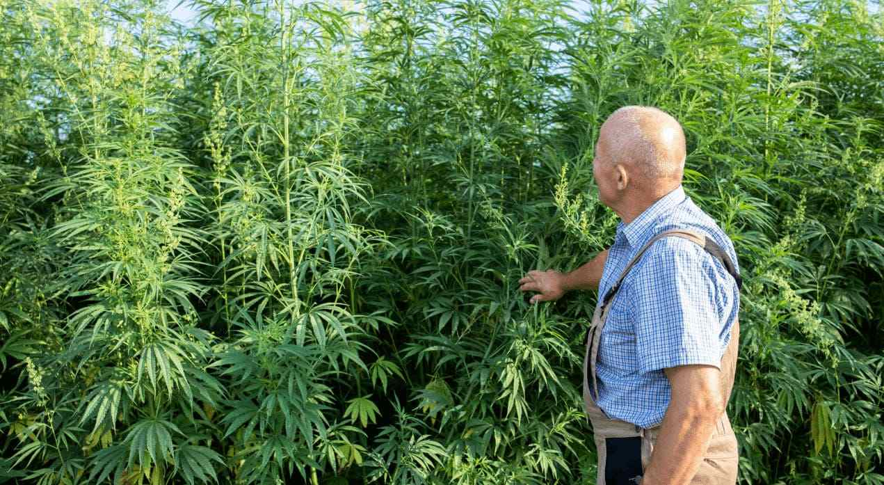 active watch cannabis grow facility security and video monitoring systems